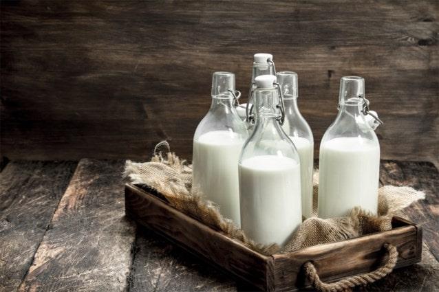 Why Drink Camel Milk: 5 Science-backed Camel Milk Benefits
