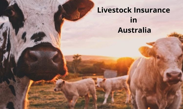 How Can You Protect Your Livestock From Predators?
